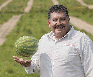 Francisco Olvera, productor de sandía a campo abierto.