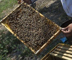 Trevor Smith, apicultura